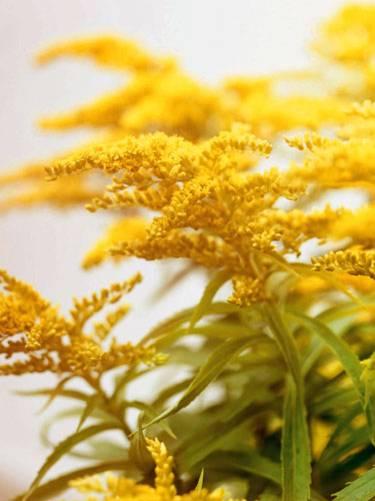 Für Balkon und Garten: Gelbe Blumen und Pflanzen | BRIGITTE.de