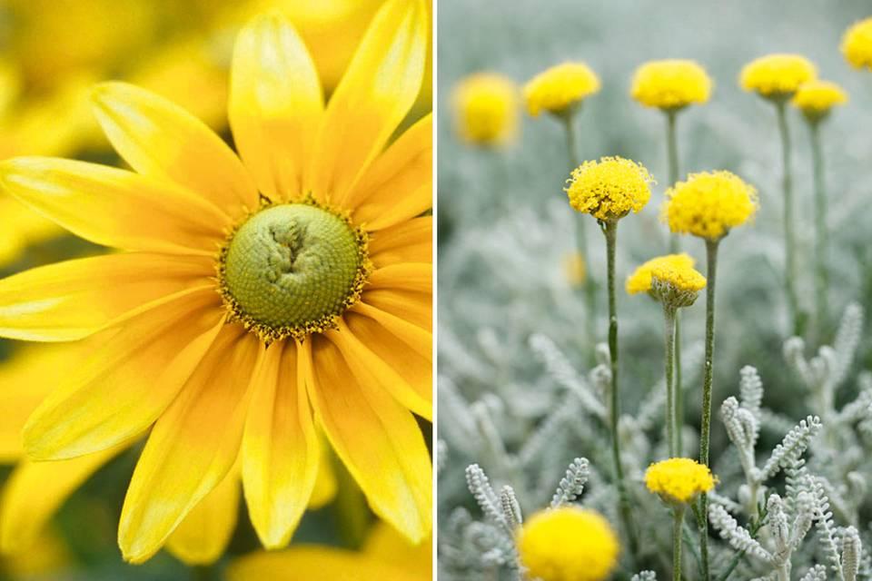 Gelbe Blumen und Pflanzen