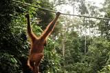 Wälder und Artenvielfalt