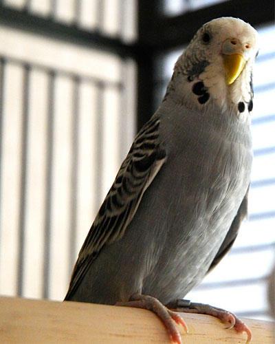Sybille und ihr Vogel-Freund