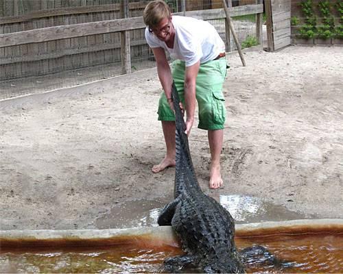 Joko Krokodil