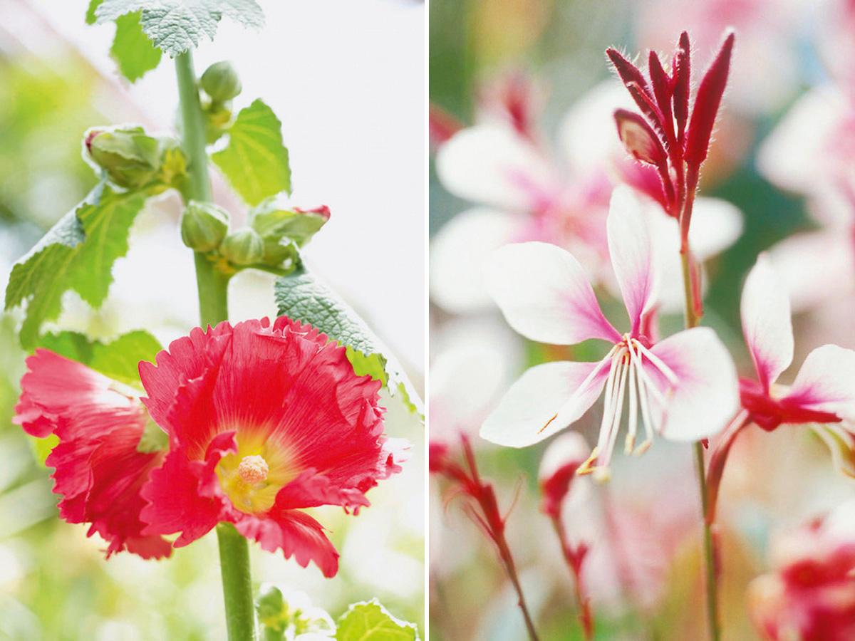 Rote Blumen und Pflanzen