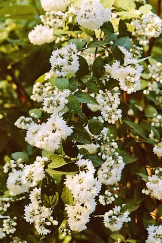 Für Balkon und Garten: Weiße Blumen und Pflanzen | BRIGITTE.de