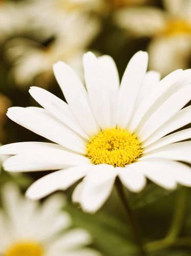 Für Balkon Und Garten Weiße Blumen Und Pflanzen Brigittede