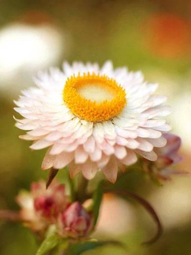 Wissenstest: Welche Blume ist das?