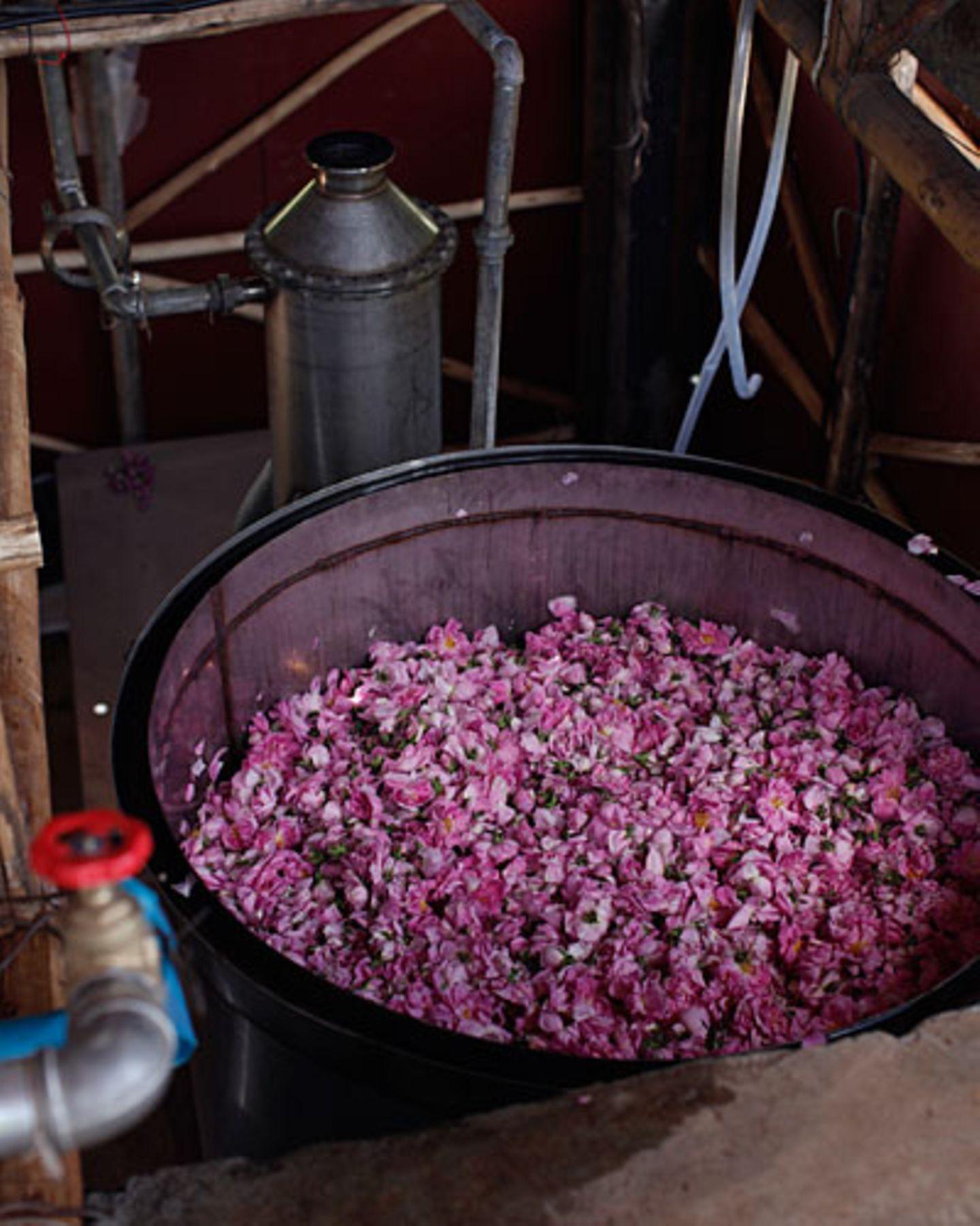 Die Menschen in der Region erhoffen sich durch die Destille ein besseres Einkommen.