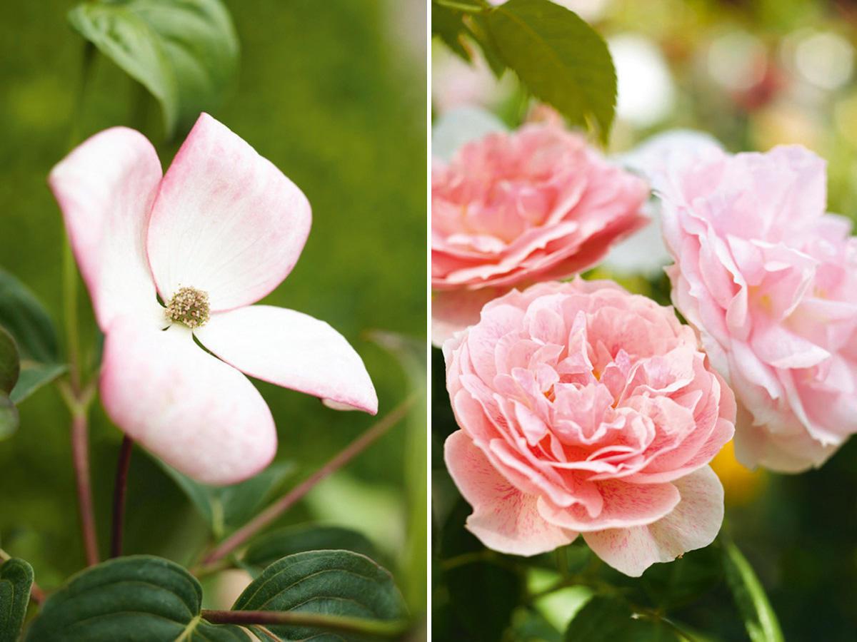 Rosa Blumen und Pflanzen
