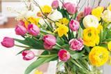 Tulpe, Ranunkel, Narzisse und Felsenbirne