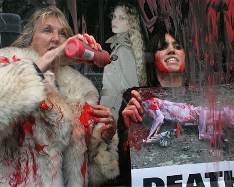 Und immer wieder Pelze: Bei einer Aktion im Schaufenster von Stardesigner Jean Paul Gaultier übergießt Ingrid Newkirk mit Aktivistinnen Pelz-Kreationen mit Kunstblut.