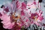 Das Künstler-Duo Peter Fischli und David Weiss legt zwei Fotos übereinander und erzeugt so zartes Frühlingsflair. Fischli Weiss: Ohne Titel (Blume 1/54) 1997/98.