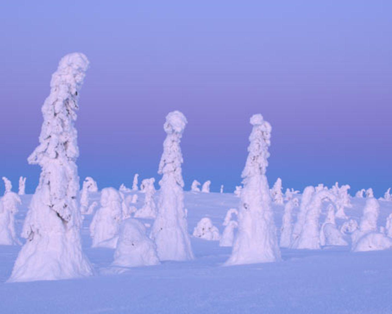 Winterliche Taiga bei -40 Grad
