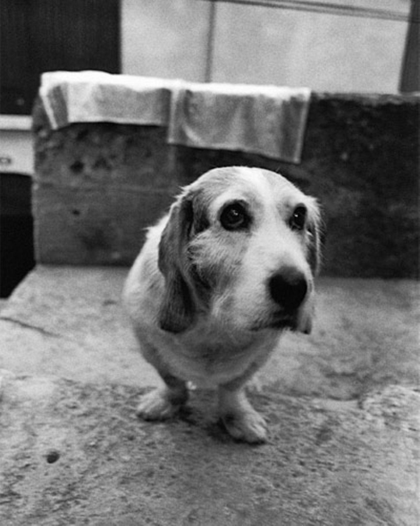 Schauen Sie sich den Kleinen an. Können diese Augen lügen? (Frankreich, 1999)