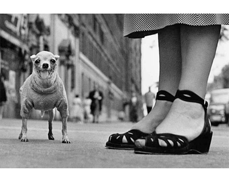 Kleiner Kerl lebt auf großem Fuß. (New York City, USA, 1946)