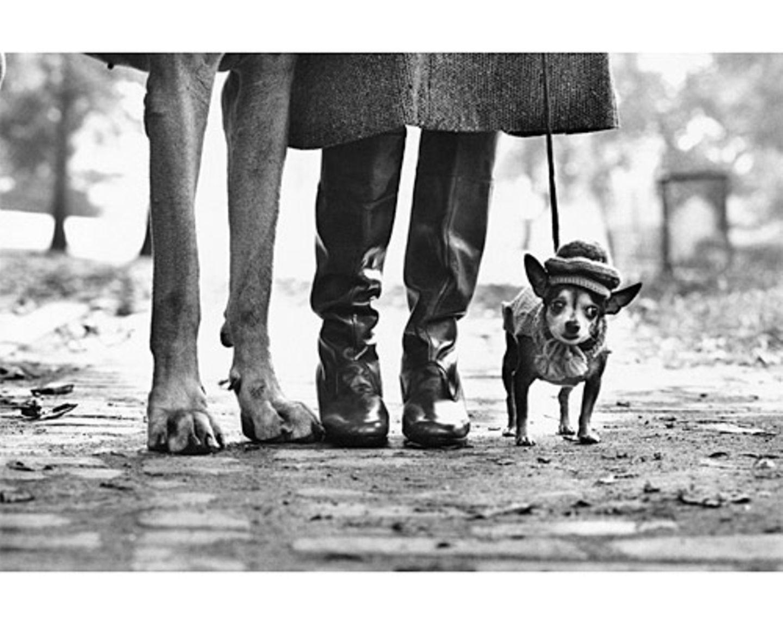 Die Kleinsten werden die Schönsten sein. (New York City, USA, 1974)