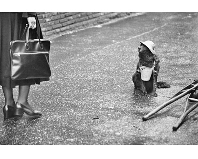 Helfer in der Not. (Rom, Italien, 1978) Sie wollen sich mit anderen über Hunde austauschen? Dann diskutieren Sie in unserem Forum