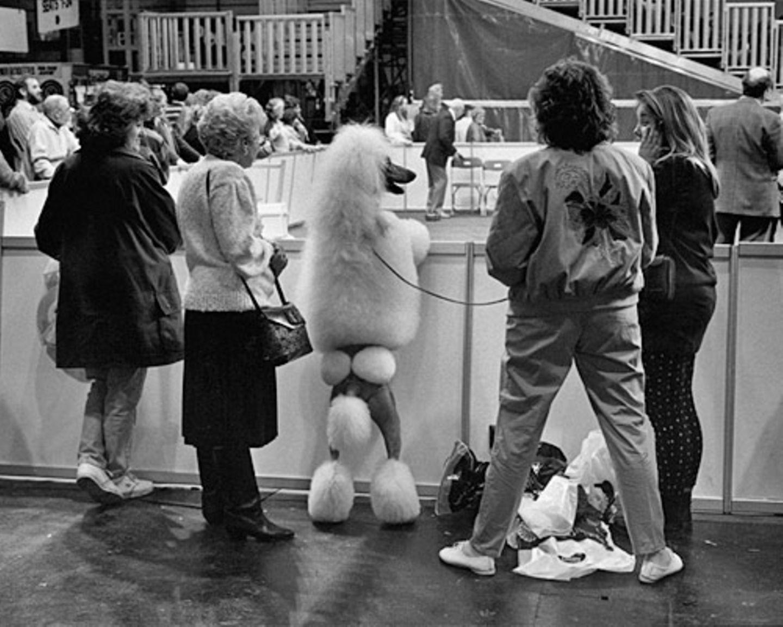 Wer ist eigentlich hier der Hund? (Birmingham, Großbritannien, 1991)