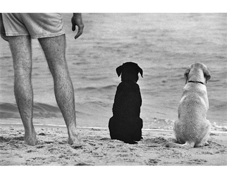 Treue Freunde. (Amagansett, New York, USA, 1990)