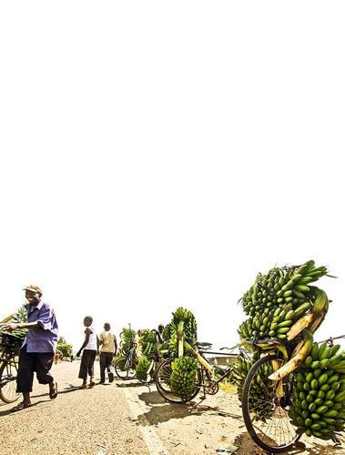 """Reise-Kochbuch """"Spices & Spandex"""": Auf ihrer Reise begegnen Tom und Matt auch anderen Radlern mit schwerem Gepäck. Wie hier in Uganda - Fahrräder sind hier Bananentransportfahrzeuge auf zwei Rädern."""