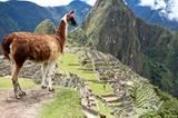 Macchu Picchu Peru Lama