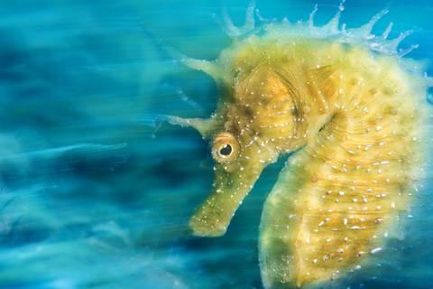 Unterwasser-Fotos zum Wegträumen