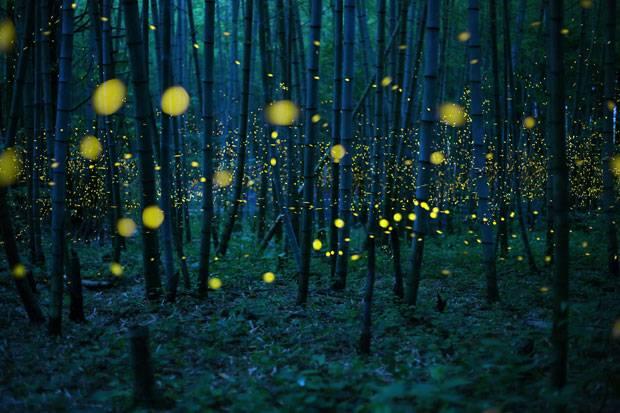 """Enchanted Bamboo Lights"""