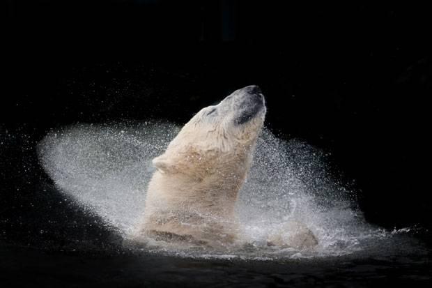 """""""A polar bear enjoying a bath"""""""