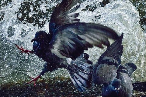 """""""Splashing Birds"""""""