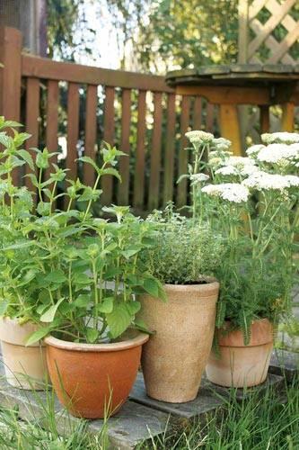 kräutergarten: kräuter anbauen: frische gewürze aus dem garten, Garten und erstellen