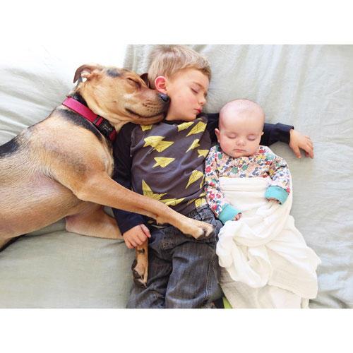 """Mittagsschlaf mit Hund: Auf ihrem Blog beschreibt Jessica Shyba, wie sich das tägliche Ritual abspielt: """"Evangeline ist die erste, die ich schlafen lege. Sobald sie eingeschlafen ist, legen sich Beau und Theo dazu und ich bleibe bei ihnen, bis sie eingeschlafen sind. Sobald alle schlafen, lege ich Evvie näher zu den anderen beiden - denn sie schlafen wirklich alle besser mit einem anderen warmen Körper und einem sanften Herzschlag direkt neben ihnen."""""""