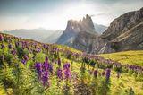 Die Geislerspitzensind schroff und zerklüftet - und bilden einen schönen Kontrast zu den bunt blühenden Wiesen im Frühling.