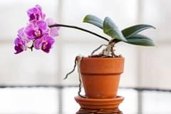 Pflanzen kaufen? Was jetzt im Trend liegt