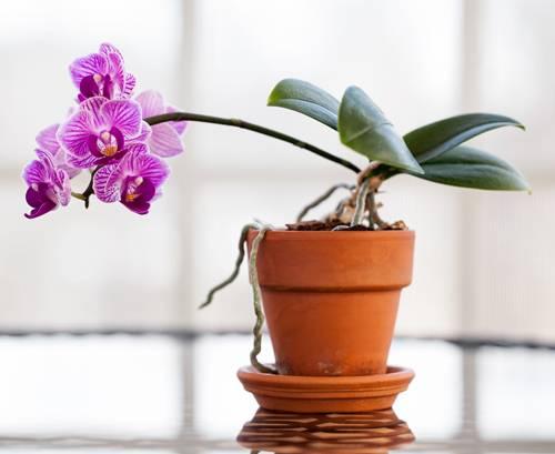 Wohnideen: Wohnen Mit Pflanzen | Brigitte.de Zimmerpflanzen Wohnideen