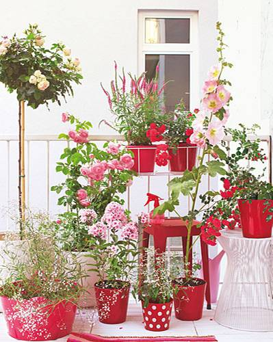 Pflanzen Töpfe Balkon Süden
