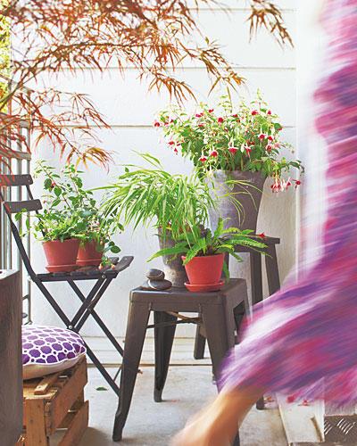 Pflanzen Fuchsien Farn