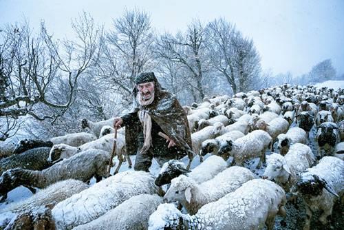 Sony World Photography Awards 2015: Ein nordirakischer Hirte wird von einem Schneesturm überrascht.