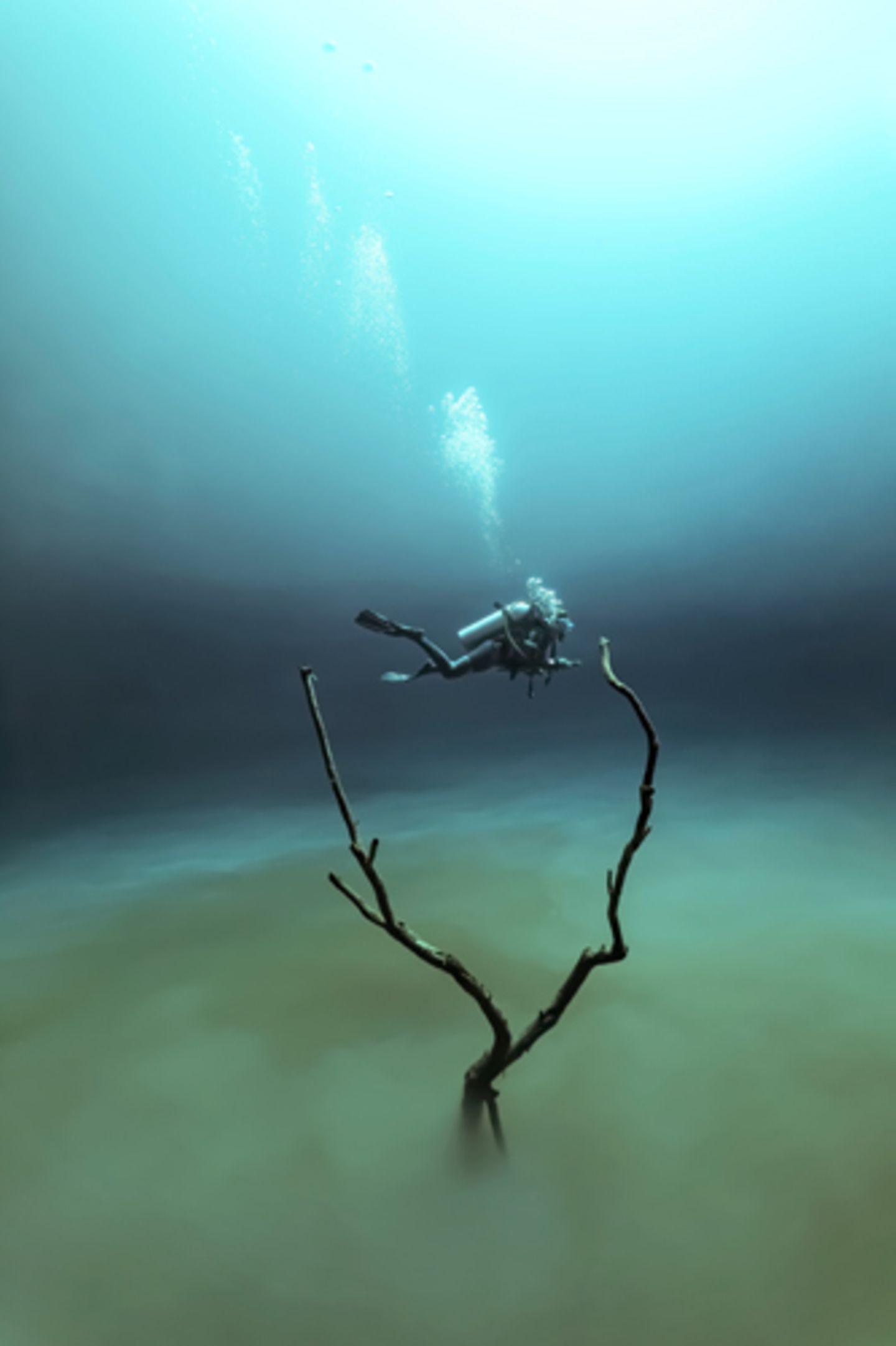 """""""'Angelita"""" von Fabrice Guerin entstand in einer Unterwasserhöhle, die in 30 Meter Tiefe eine Schicht auf Wasserstoffsulfit hat. """"Die Atmosphäre ist ähnlich wie die einer Mondlandschaft. Als ich diese Taucherin zwischen den Zweigen eines Baumes sah, hatte ich alle Zutaten für ein surreales Unterwasserfoto beisammen"""", so der Fotograf über das Bild. www.upylondon.com"""