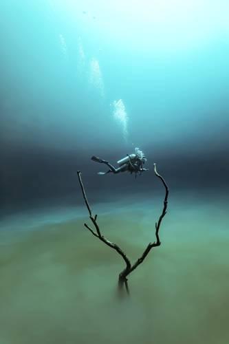 """""""Underwater Photographer of the Year"""": """"'Angelita"""" von Fabrice Guerin entstand in einer Unterwasserhöhle, die in 30 Meter Tiefe eine Schicht auf Wasserstoffsulfit hat. """"Die Atmosphäre ist ähnlich wie die einer Mondlandschaft. Als ich diese Taucherin zwischen den Zweigen eines Baumes sah, hatte ich alle Zutaten für ein surreales Unterwasserfoto beisammen"""", so der Fotograf über das Bild.     www.upylondon.com"""