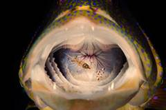 """""""Sagen Sie bitte mal AAAAH...sehr schön...oh, Sie nutzen keine Zahnseide, oder?"""" ( """"Cleaning'"""", Mark Fuller) www.upylondon.com"""