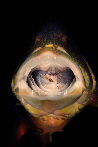 """""""Underwater Photographer of the Year"""": """"Sagen Sie bitte mal AAAAH...sehr schön...oh, Sie nutzen keine Zahnseide, oder?"""" ( """"Cleaning'"""", Mark Fuller) www.upylondon.com"""