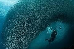 """Luftblasen, Unterwasserstrudel - oder ein atemberaubend schöner Schwarm von Fischen? """"Terry in the Baitball"""" von J. Gregory Sherman. www.upylondon.com"""