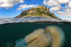 """Nein, so groß wie die Insel im Hintergrund ist dieser """"'Barrel jellyfish by the Mount"""" (Charles Hood) zum Glück nicht - aber Exemplare dieser Quallenart können schon mal einen Durchmesser von über einem Meter haben. www.upylondon.com"""