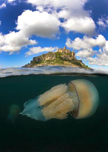 """""""Underwater Photographer of the Year"""": Nein, so groß wie die Insel im Hintergrund ist dieser """"'Barrel jellyfish by the Mount"""" (Charles Hood) zum Glück nicht - aber Exemplare dieser Quallenart können schon mal einen Durchmesser von über einem Meter haben.     www.upylondon.com"""