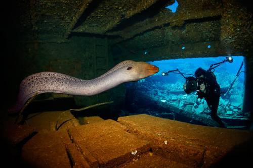 """""""Underwater Photographer of the Year"""": Nein, diese Muräne schwimmt nicht ganz dicht an der Linse vorbei. Die ist wirklich so groß. (""""EELASTIC"""" von Tobias Friedrich)    www.upylondon.com"""