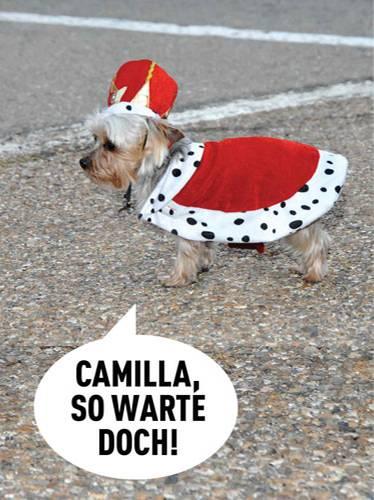 Hunde-Karneval: Die niedlichste Faschingsparty aller Zeiten