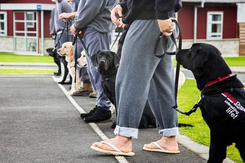 Arbeitende Hunde: Manch einer behauptet, Hunde seien doofe Tiere, weil sie alles machen, was man ihnen anerzieht und sie keinen eigenen Willen hätten. Dabei sind die Vierbeiner intelligente, zuverlässige und sehr sensible Tiere, die Menschen seit Tausenden von Jahren als treue Gefährten begleiten. Sie wurden schon früh für bestimmte Aufgaben eingesetzt, als Jagdhund oder zum Schafehüten etwa. Noch heute gibt es Hunde, die im Behördendienst als Drogen- und Bombenschnüffler tätig sind oder Vermisste aufspüren. Ihre gute Nase ist besser als jedes technische Gerät. Die Hunde müssen nicht gleich ihr Leben für uns riskieren. Auch in harmlosen Situationen sind sie eine große Hilfe: Sie begleiten Blinde sicher durch die Straßen, helfen Menschen mit Behinderungen im Alltag oder spenden bereitwillig - gegen ein paar Streicheleinheiten - Trost. Der Fotograf Andrew Fladeboe reiste um die Welt, kroch in Ruinen und begleitete Hütehunde bei ihrer Arbeit, um zu verdeutlichen, welche Stütze sie für uns sind. Wir zeigen hier einige seiner hervorragenden Bilder. Wer auf den Hund gekommen ist und mehr sehen möchte: Andrew Fladeboe bekommt eine eigene Ausstellung bei Peter Hay Halpert Fine Art in New York, wo man ausgewählte Drucke erwerben kann.