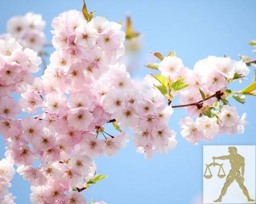 Diese Blumen liebt die Waage