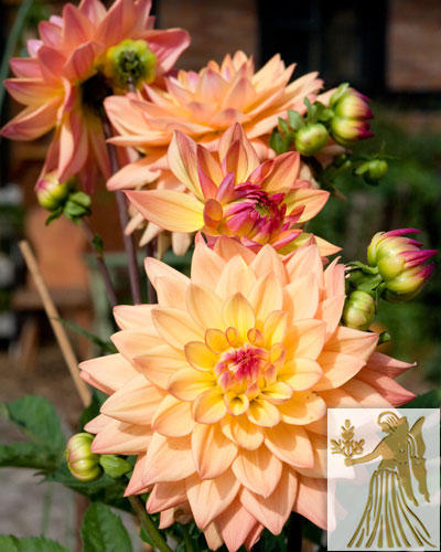 Diese Blumen liebt die Jungfrau