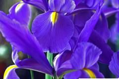 Diese Blumen liebt der Steinbock