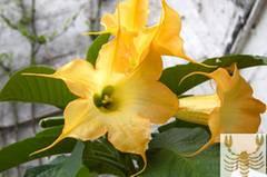 Diese Blumen liebt der Skorpion