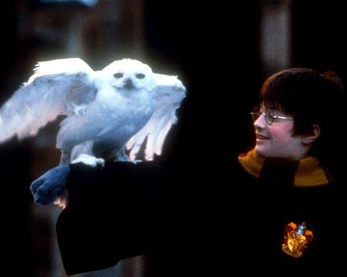 """Zickig: Eule Hedwig aus """"Harry Potter"""""""